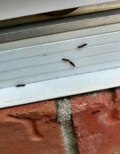 termites 3